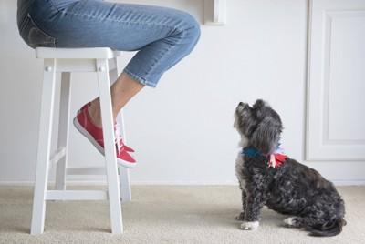 椅子に座る人を見つめる犬