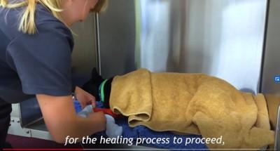 毛布に覆われた犬