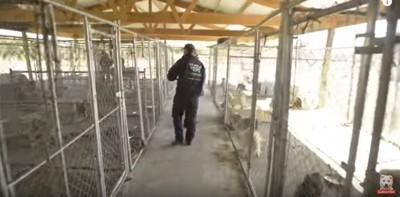 劣悪な環境の子犬工場の摘発