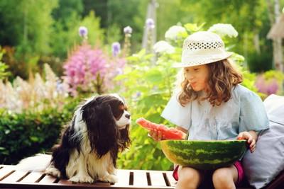 スイカを食べる女の子とそれを見る犬
