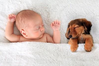 犬と一緒に寝る赤ちゃん
