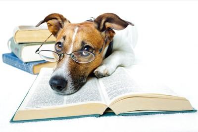 メガネをかけて本の上に寝ている犬