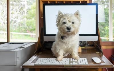 パソコンの前に座る犬