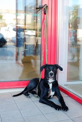 店の外で待つ黒い犬