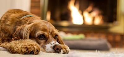 暖炉の前で寝ている犬