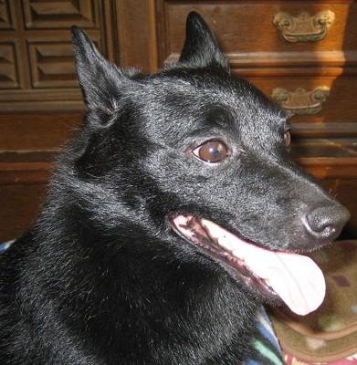 尿路結石になった当時の愛犬