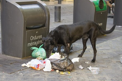 ゴミを漁っている犬