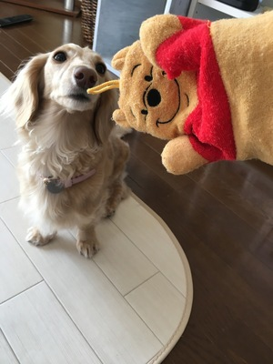 愛犬が遊んだ布の商品
