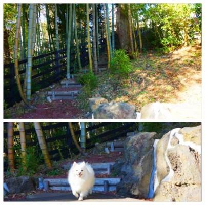 竹林を走る犬