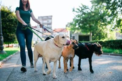 一緒に散歩する4匹の犬たち