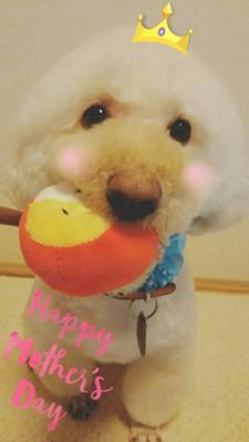 おもちゃをくわえている愛犬