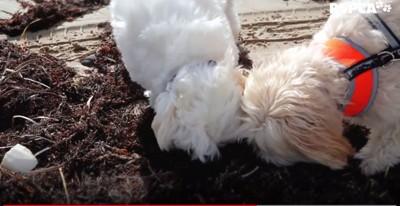 2匹の小型犬