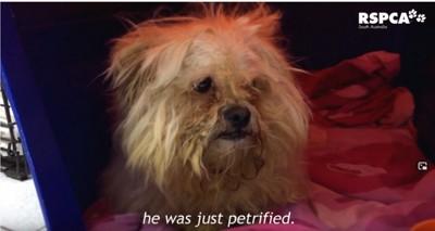 被毛が固まって汚れた犬