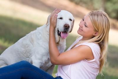 飼い主に撫でてもらう犬