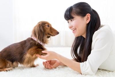 見つめる犬と飼い主