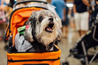 カートに乗った犬