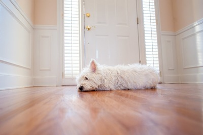 扉の前で寝ている白い犬