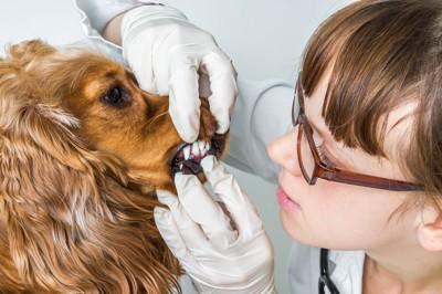 歯の診察を受ける犬とメガネの女性