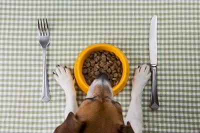 食器とテーブルと犬