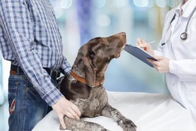 獣医師の説明を聞く飼い主とジャーマンポインター