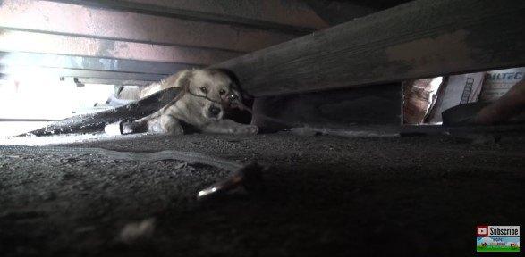 首輪が顔にかかる犬