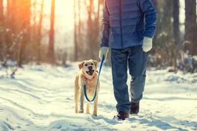 雪道を飼い主と散歩する犬