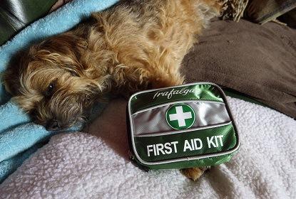 救急セットと犬