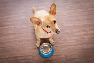 餌入れと上を見上げる犬