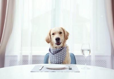 ご飯を待つ愛犬