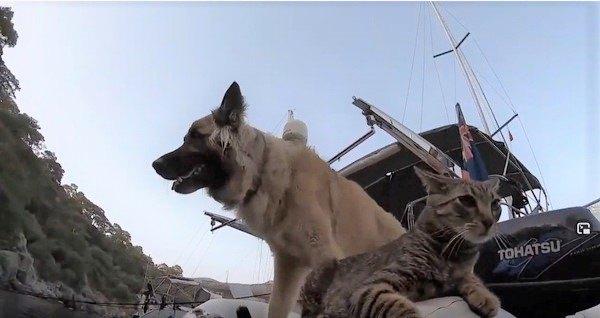 船上の犬と猫