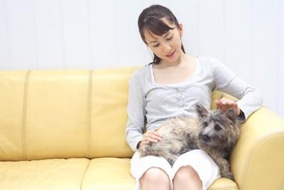 ソファーに座る女性の膝の上の犬