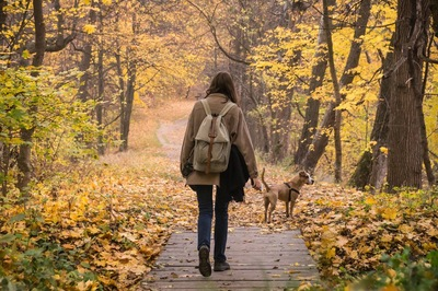 紅葉した森の中を歩く飼い主さんと犬