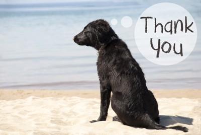 """Thank you""の吹き出しと黒い犬"