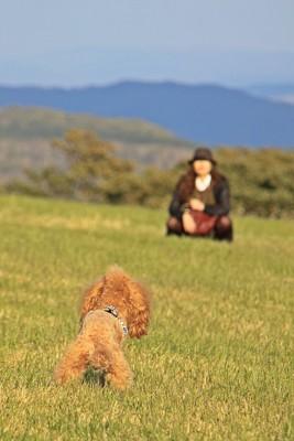 ノーリードで遊ぶ犬と飼い主