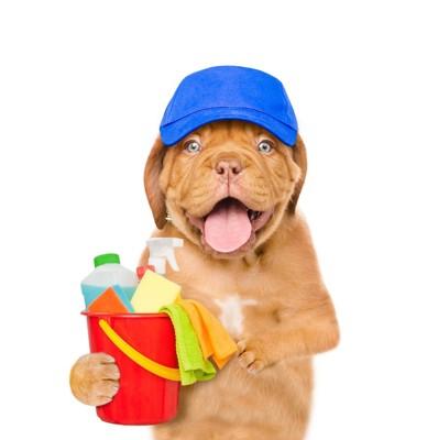 掃除道具を持った犬