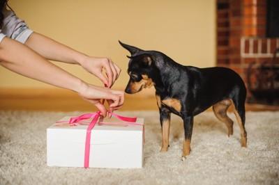 プレゼントの箱を開けているのを見ている犬