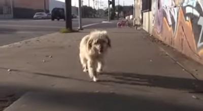 ついてくる犬