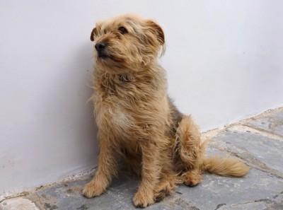 壁の前で不安そうに座る犬