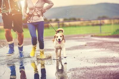 雨の日 カップルと犬の散歩