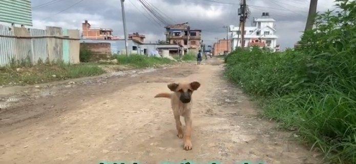 駆け寄る野良犬