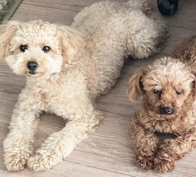 先住犬とココ