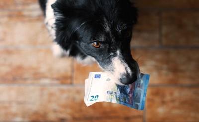 お札をくわえて上目遣いで見つめる犬