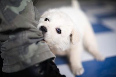 ズボンを噛んで引っ張る犬