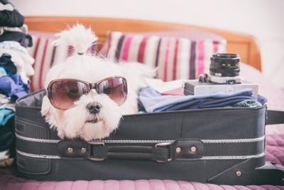 キャリーバッグに入る犬