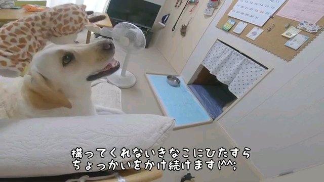構って~字幕
