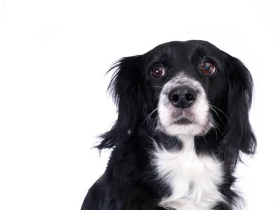 不安そうな表情をした犬の顔アップ