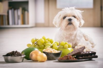 食べ物に囲まれる犬