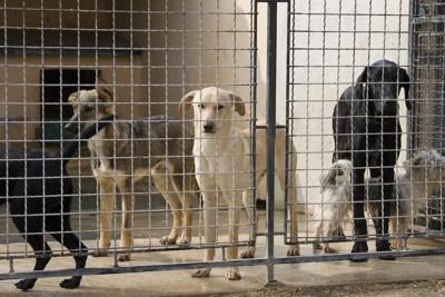 フェンスの向こうにいる犬たち