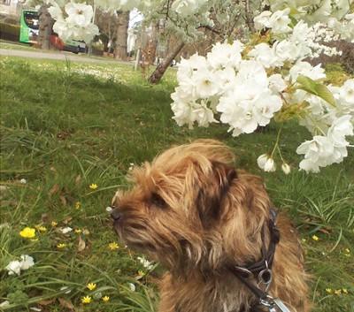 白い花と犬
