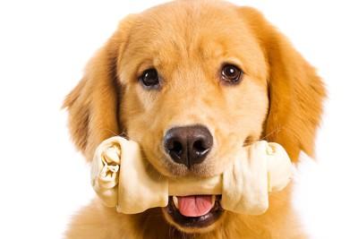 骨型のおやつをくわえた犬
